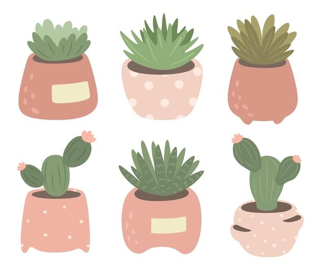 Collezione di cactus e piante grasse in vaso.