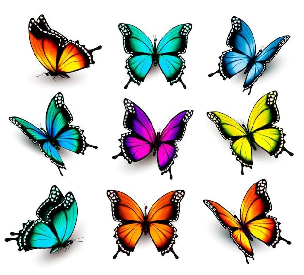 Collezione di farfalle colorate, che volano in direzioni diverse. vettore.