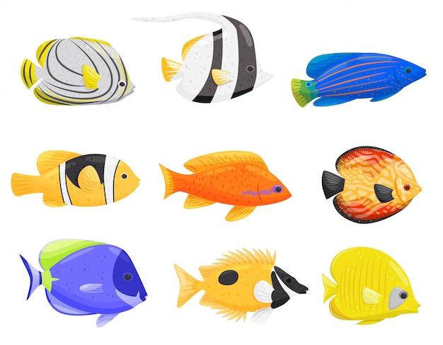 Raccolta di pesci colorati su sfondo bianco.