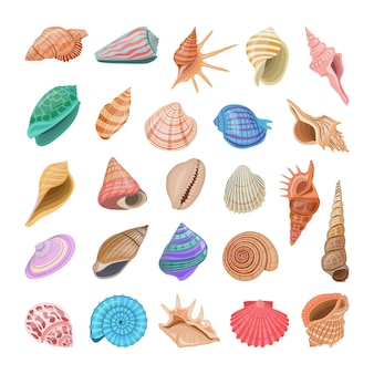 Collezione di conchiglie realistiche colorate.