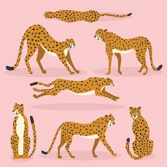 Raccolta di simpatici ghepardi disegnati a mano su sfondo rosa, in piedi, stretching, corsa e camminata. illustrazione piatta