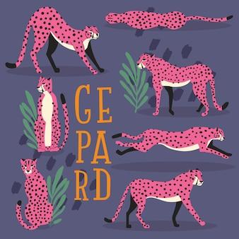 Collezione di simpatici ghepardi rosa disegnati a mano su sfondo viola scuro, in piedi, allungando, correndo e camminando con piante esotiche e scritte a mano. illustrazione piatta