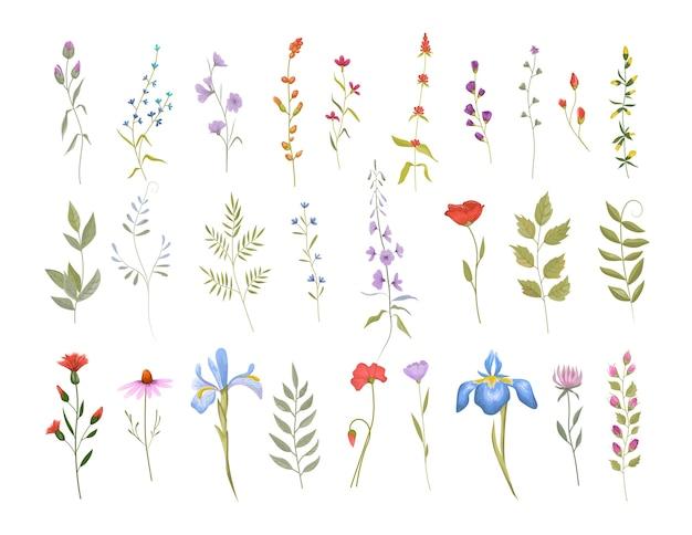 Raccolta di simpatici fiori selvatici. set di elementi floreali botanici. illustrazione vettoriale isolato Vettore Premium