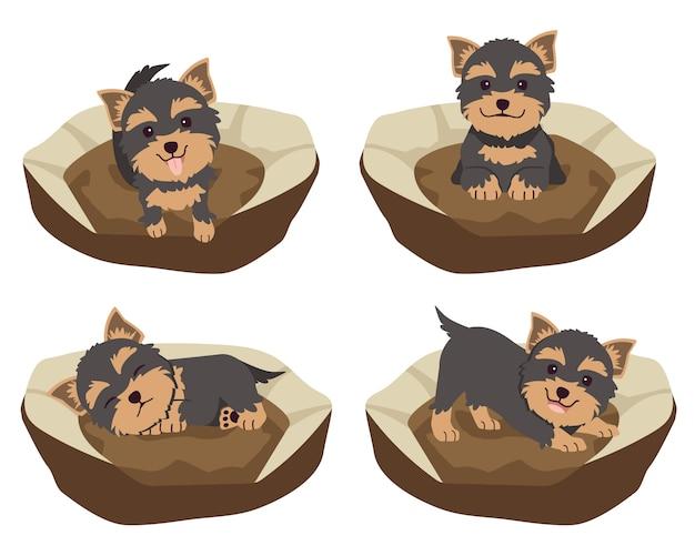 La collezione di cute yorkshire terrier sul materasso o sul letto del cane in appartamento