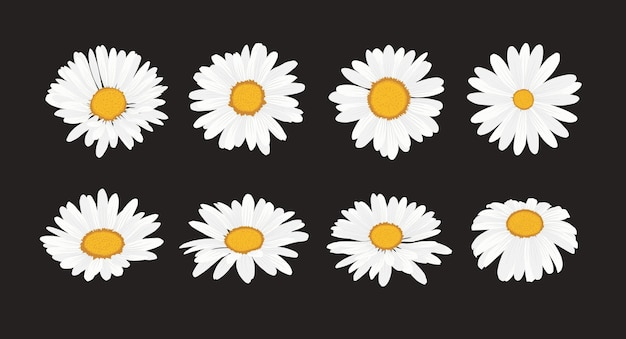 Collezione di fiori margherita con stile design piatto