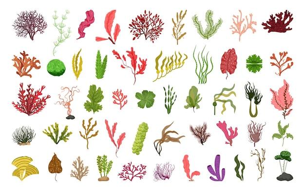 Raccolta di alghe dettagliate