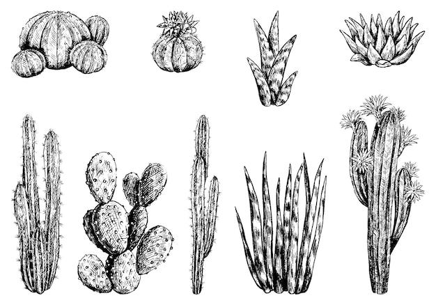 Raccolta di diversi cactus. insieme delle piante del deserto. illustrazione vettoriale disegnato a mano. schizzi botanici vintage isolati su bianco. elementi decorativi di incisione per il design.