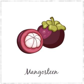 Raccolta di frutta esotica con mangostano con fetta