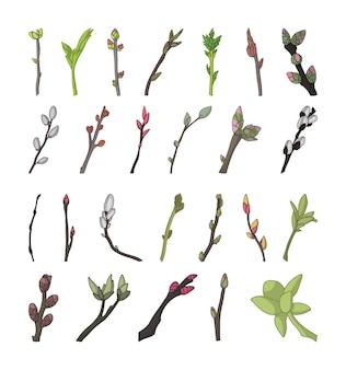 Raccolta di ramoscelli fioriti di alberi.