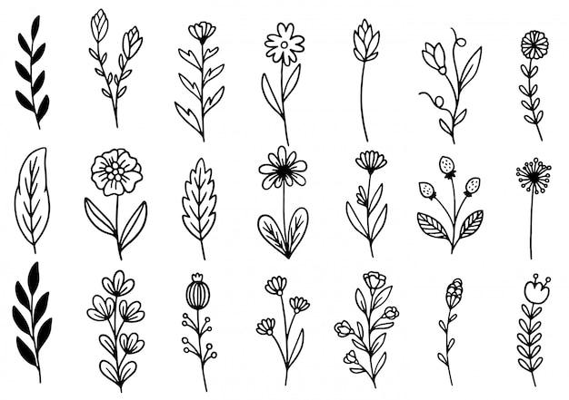 Collezione felce foresta eucalipto arte fogliame foglie naturali erbe in stile linea. illustrazione elegante di bellezza decorativa per il fiore disegnato a mano di progettazione