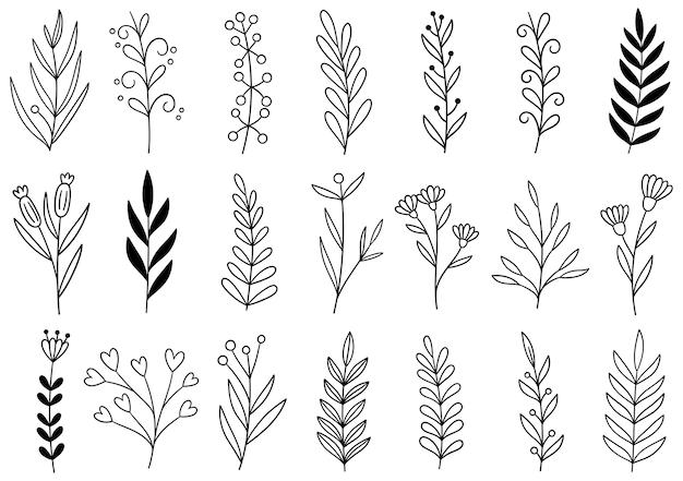 Collezione foresta felce eucalipto arte fogliame foglie naturali erbe in stile linea.