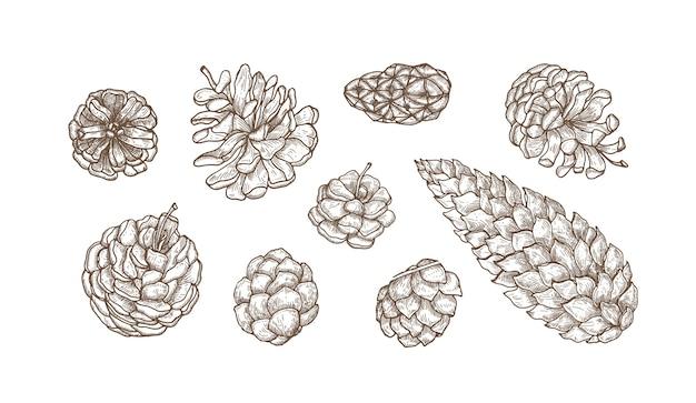 Collezione di coni disegnati a mano di conifere sempreverdi