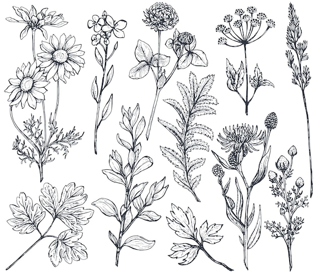Raccolta di fiori disegnati a mano ed erbe isolare su sfondo bianco Vettore Premium