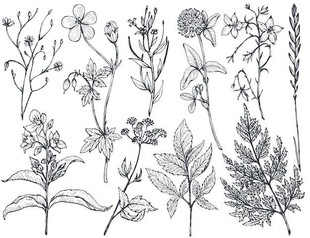 Raccolta di fiori ed erbe disegnati a mano