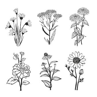 Raccolta di fiori disegnati a mano.
