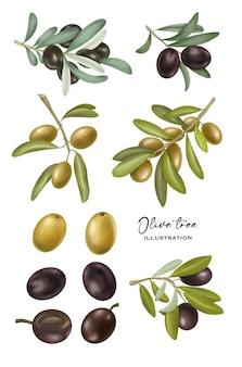 Raccolta di olive verdi e nere disegnate a mano e rami di ulivo