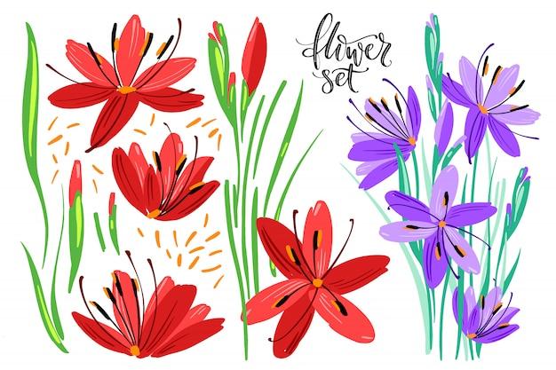 Raccolta di piante disegnate a mano.
