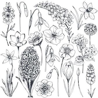 Collezione di piante e fiori primaverili disegnati a mano. monocromo