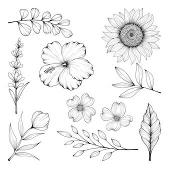 Raccolta di erbe e fiori selvatici e foglie isolate su bianco