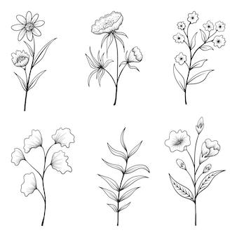 Raccolta di erbe e fiori selvatici e foglie isolate