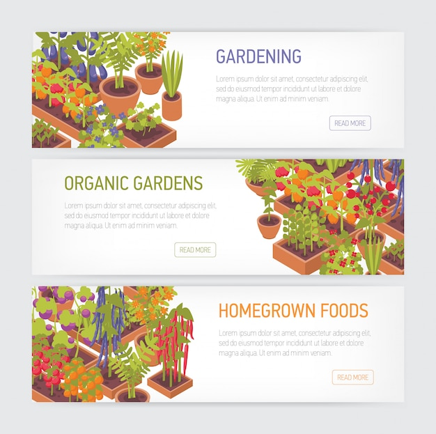 Raccolta delle insegne orizzontali di web con le piante che crescono in vasi e fioriere, posto per testo su fondo bianco. cibo locale, giardino di casa, giardinaggio biologico. illustrazione colorata