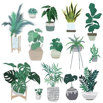 Collezione di piante da appartamento in vaso