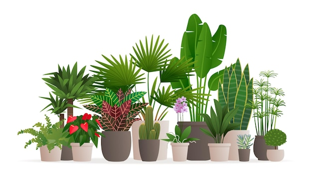 Collezione di piante d'appartamento. piante in vaso su bianco