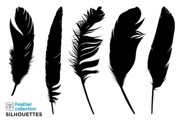 Raccolta di sagome isolate di piume di uccelli.