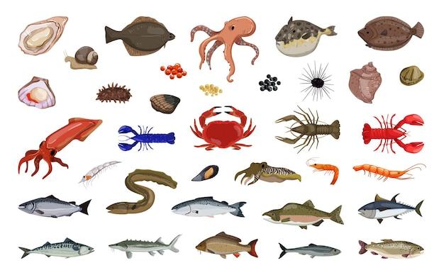 Collezione di pesci e prelibatezze marine e d'acqua dolce