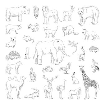 Raccolta di illustrazioni monocromatiche di animali in stile schizzo