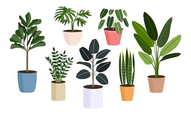 Collezione piante in vaso, piante domestiche