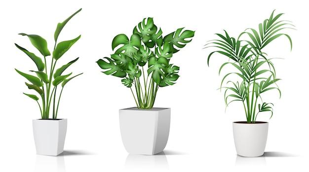 Raccolta di piante in vaso per interni isolato su bianco