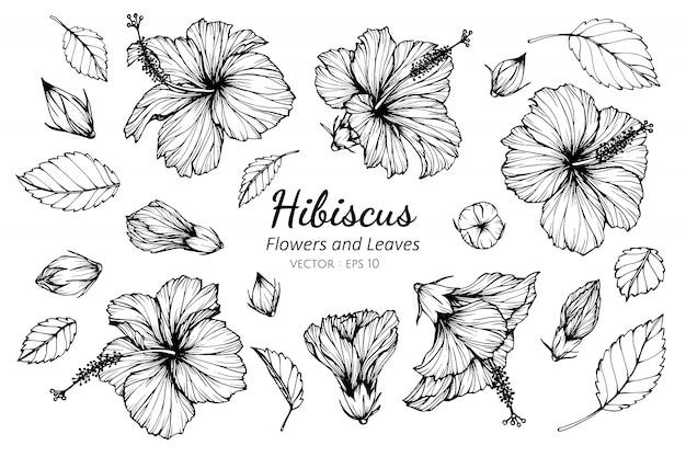 Insieme di raccolta di fiori di ibisco