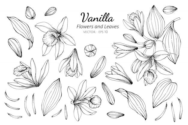 Insieme di raccolta di fiori di vaniglia