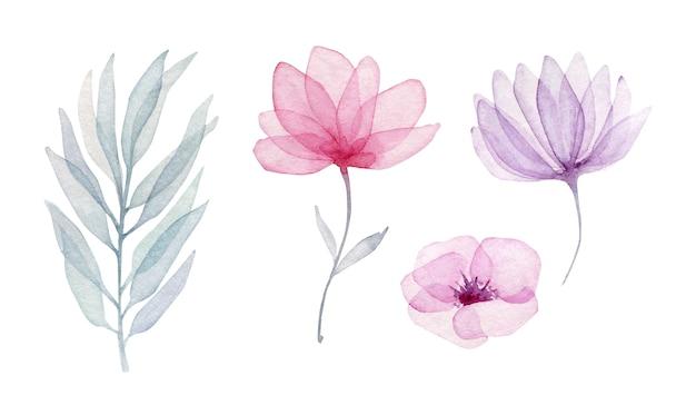 Raccolta di fiori traslucidi