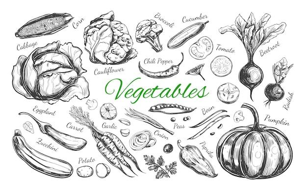 Raccolta di verdure isolato su bianco