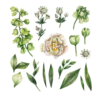 Raccolta di elementi acquerello fiori erbe foglia elementi floreali fai da te