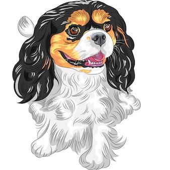 Schizzo a colori del cane cavalier king charles spaniel bre