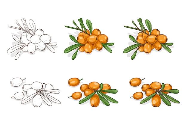Colorare e disegnare gustoso olivello spinoso