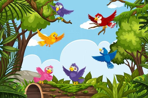 Uccelli colorati in scena della natura