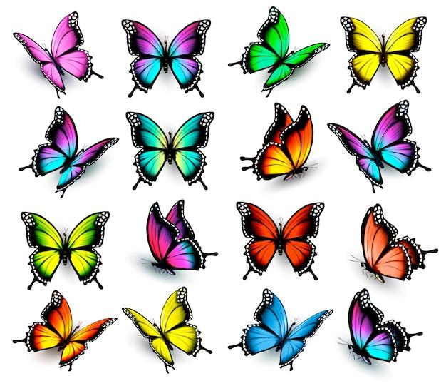 Set di farfalle colorate. vettore.