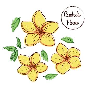 Fiore colorato cambogia con foglie