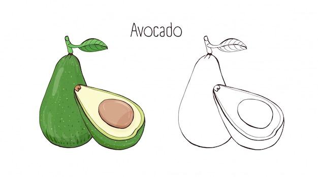 Disegni botanici monocromatici colorati e di contorno di avocado intero e tagliato con foglia.