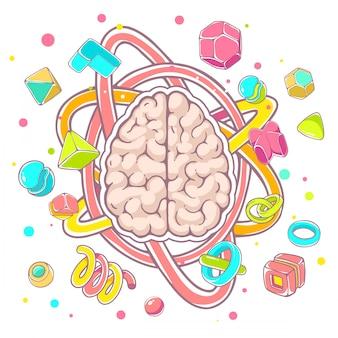 Illustrazione colorata del modello di vista superiore del cervello umano su sfondo bianco.