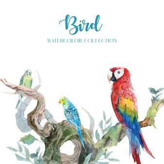 Acquerelli colorati di pappagalli e pappagallini con una serie di rami curvi in un design pulito.