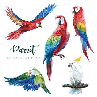 Collezione di acquerelli di pappagalli colorati