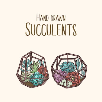 Illustrazione di pianta colorata con succulenta disegnata a mano