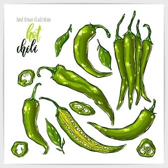 Coloratissimo set di piccanti e gustosi peperoncini jalapeno, interi ed affettati, con foglie. illustrazione disegnata a mano con titolo di scritte a mano.