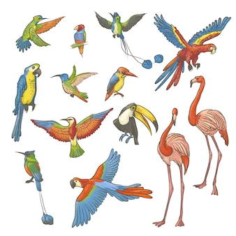 Schizzo colorato con texture set disegnato a mano su uno sfondo bianco. collezione di uccelli tropicali esotici luminosi. illustrazione isolata del profilo una varietà di fenicotteri, pappagalli e colibrì.