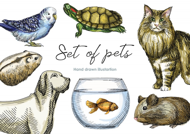 Schizzo disegnato a mano dell'acquerello variopinto dell'insieme degli animali domestici. set composto da criceto, cavia, lucertola, tartaruga, cane, gatto, vasca con pesce, pappagallo